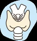 Thyroid Icon